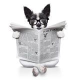 Periódico de la lectura del perro Fotografía de archivo