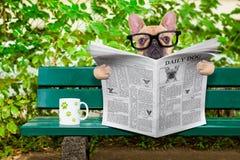 Periódico de la lectura del perro Imagenes de archivo