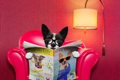 Periódico de la lectura del perro en casa Fotos de archivo