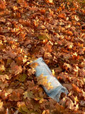 Periódico de mañana en hojas de otoño. fotos de archivo