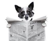 Periódico del perro Imagenes de archivo