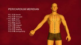 Pericardiummeridian, 3D illustration, akupunktur arkivfilmer