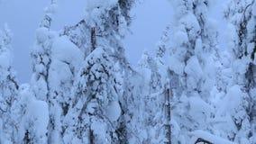 Pericoloso! Molta neve nel legno stock footage