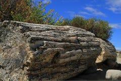 Perified woods in La Leona desert Stock Photography