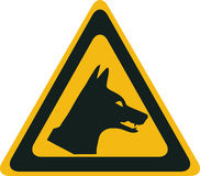 Perigo do Dingo Imagens de Stock