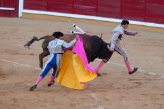 Perigo em uma tourada Imagem de Stock Royalty Free