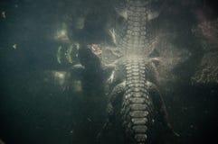 Perigo subaquático Foto de Stock Royalty Free