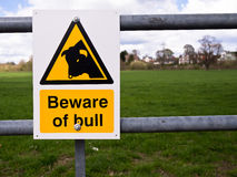 Perigo - ter cuidado com a Bull Fotografia de Stock