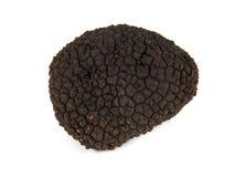 Perigord Truffle. Perigord  summer truffle (Tuber aestivum) known as the black diamond Stock Image