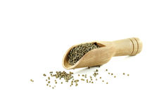 Perilla frutescens or sesame in wood spoon. Royalty Free Stock Image