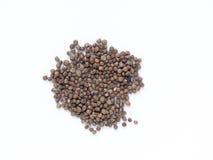 Perilla frutescens var. crispa also known as shiso seed Stock Photo