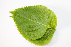 Perilla Leaf Stock Images