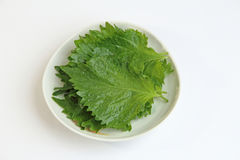 The perilla leaves, also known as Shiso leaf,  Ooba leaf or beefsteak. Shiso green vegetables on white background Stock Photos