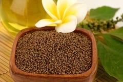 Perilla seeds and oil Perilla frutescens L. Britton Stock Images