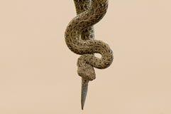 Peringuey的加法器或响尾蛇 库存图片