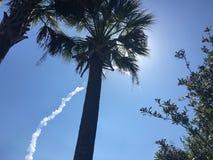 Periodi tropicali in Florida Fotografia Stock Libera da Diritti