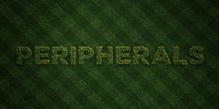 PERIPHERALS - fresh Grass letters with flowers and dandelions - 3D rendered royalty free stock image Stock Photo