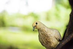 Periquito Anillo-necked indio Imagen de archivo libre de regalías
