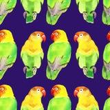 Periquito do papagaio da aquarela Foto de Stock
