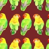 Periquito do papagaio da aquarela Imagem de Stock