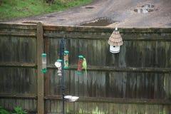 Periquito/papagaio verdes em um alimentador inglês doméstico do pássaro do jardim fotografia de stock royalty free