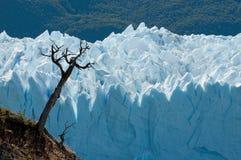 perito του Moreno Παταγωνία παγετών&omeg στοκ εικόνα με δικαίωμα ελεύθερης χρήσης