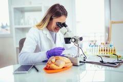 Perito fêmea do controle da qualidade de alimento que inspeciona no espécime da carne fotos de stock royalty free