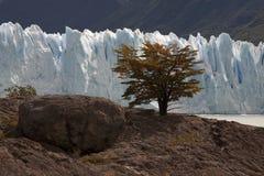 Perito Moreno. South America, Argentina, Pargue Nacional Los Glasiares, glacier Perito Moreno Royalty Free Stock Photos