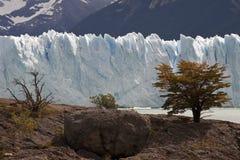 Perito Moreno. South America, Argentina, Pargue Nacional Los Glasiares, glacier Perito Moreno Stock Photos