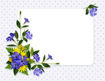 Periwinkle and daisy flowers decoration and a card Royalty Free Stock Images