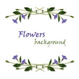 Periwinkle flowers frame Stock Photos