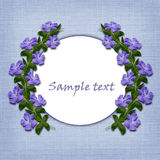 Periwinkle flowers line and a circle Royalty Free Stock Images