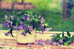 Periwinkle flowers Royalty Free Stock Image