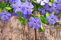 Periwinkle flowers Royalty Free Stock Photos
