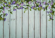 Periwinkle flowers on wooden shabby chic background. Vinca sprin Stock Image