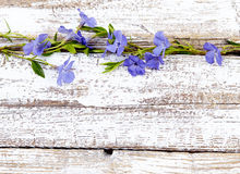Periwinkle on old wood background Stock Photography