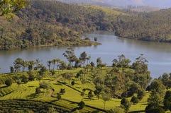 Periyar lake. A scene of Periyar lake with tea and nilgiri plantation between Munnar and Thekkady at Kerala, India royalty free stock photos