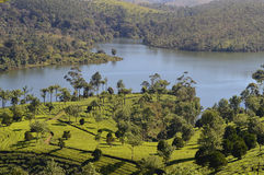 Periyar lake Stock Photo