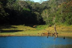 Periyar National Park and Wildlife Sanctuary. A distance view of the elephant family in the Periyar national park and wildlife sanctuary stock photo