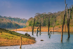Periyar National Reserve. Touristic boat on the lake in the Periyar National Park, India royalty free stock photo
