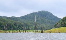 Periyar sjö med den doppade träd och kullen, Kerala, Indien royaltyfri fotografi