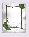 perkament - het frame van de Klimop en van de tak   Stock Foto's