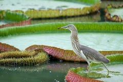 Perked Bird Stock Photo