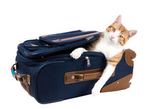 Perky cat sitting in a suitcase. Isolated on white background Royalty Free Stock Images