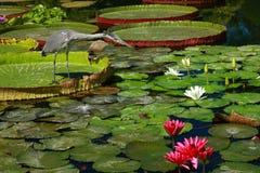 Perky Heron Stock Images