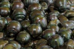 Perla barroca negra de Tahití - ter 70 Imagenes de archivo