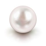 Perla blanca Imágenes de archivo libres de regalías