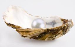 Perla blanca Fotos de archivo libres de regalías