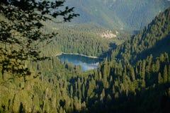 Perla blu della foresta fotografia stock libera da diritti