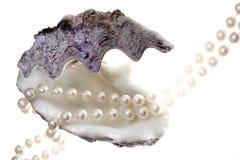 Perla e cockleshell Immagini Stock Libere da Diritti